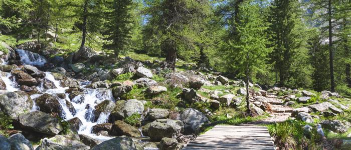 Nature Lovers - Campsite Nature